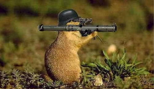 Squirrel_gun.jpg