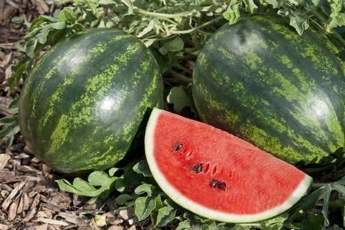Watermelon_19-1.jpg
