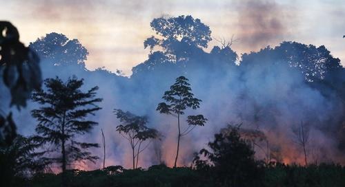 amazon_forest_fire-1.jpg