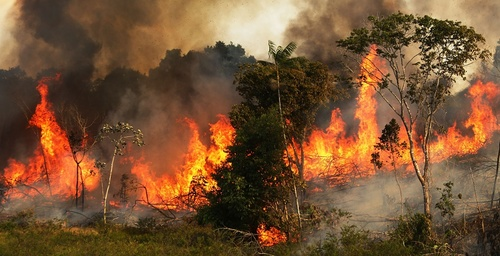 amazon_forest_fire-2.jpg
