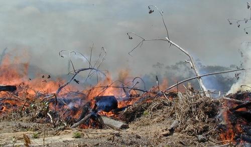 amazon_forest_fire-3.jpg