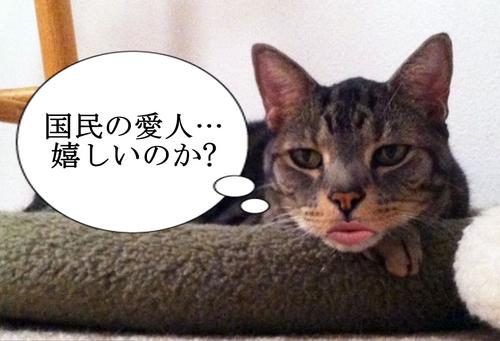 angry-cat.jpg