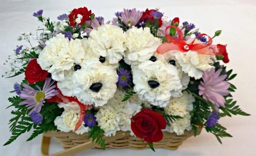 animal_flower.jpg
