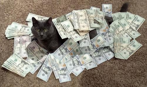 cash-cats.jpg