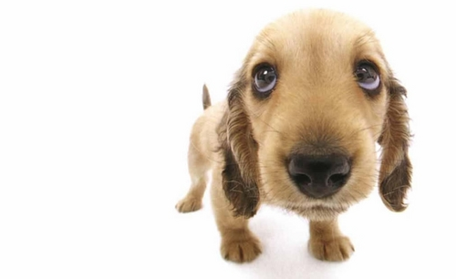 funny-dog-160524.jpg