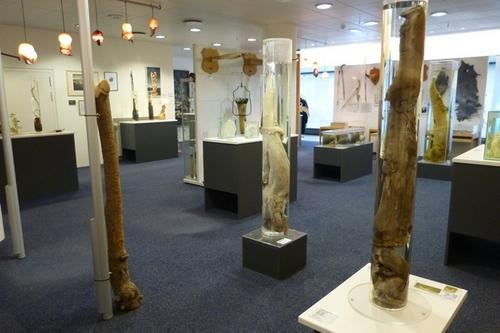 iceland-penis-museum-2.jpg