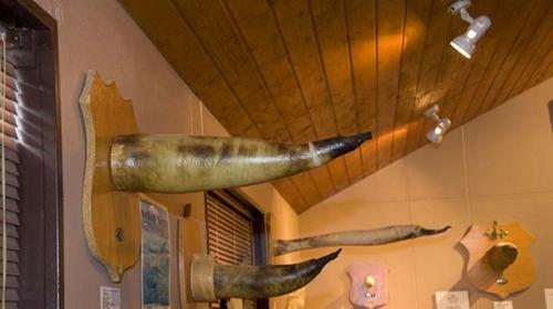 iceland-penis-museum-3.jpg