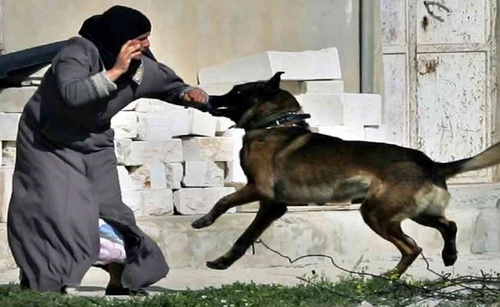 india_dogattack.jpg