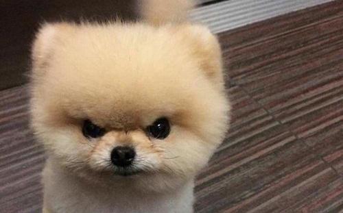 papydog_angry.jpg