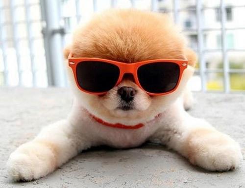 puppy_kirari.jpg
