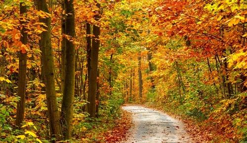 red_leaf_2.jpg