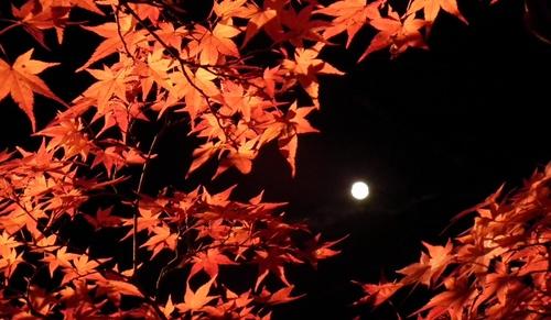 red_leaf_3.JPG