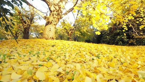 red_leaf_5.jpg