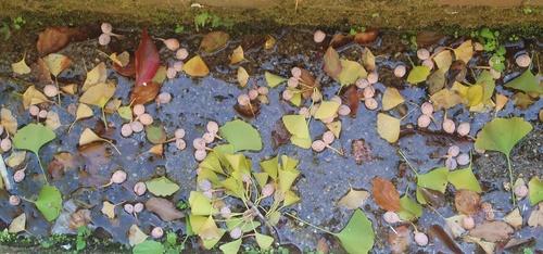 red_leaf_6.jpg