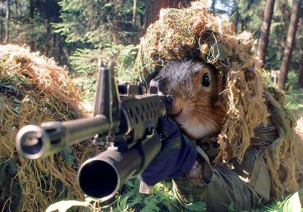 squirrel soldier-1.jpg