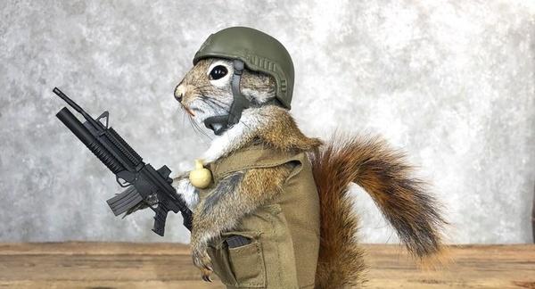squirrel soldier-2.jpg