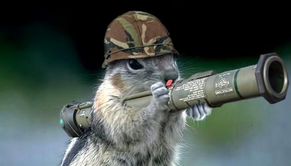 squirrel soldier-3.jpg